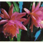 Кактусы 1 150x150 - Цветы