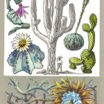 Кактусы 150x150 - Удивительные растения