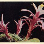 Кактус 3 150x150 - Цветы