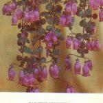 Каланхоэ одноцветное 150x150 - Цветы