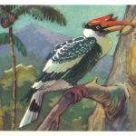 Калао двурогий 150x150 - Птицы
