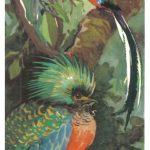 Квезал Кецаль 150x150 - Птицы