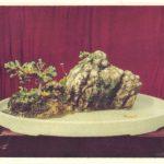 Китайский миниатюрный пейзаж 12ррр 150x150 - Цветы