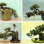 Китайский миниатюрный пейзаж 13 16 150x150 - Цветы