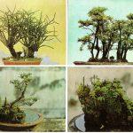 Китайский миниатюрный пейзаж 17 20 150x150 - Цветы