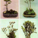 Китайский миниатюрный пейзаж 21 24 150x150 - Цветы