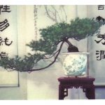Китайский миниатюрный пейзаж 5 150x150 - Цветы
