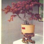 Китайский миниатюрный пейзаж 8 150x150 - Цветы