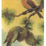 Клесты 150x150 - Птицы