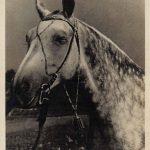 Кобыла Украдка на ВСХВ  150x150 - Другие животные
