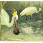 Колпица0001 150x150 - Птицы