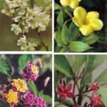 Композиции из цветов № 0089 0092 150x150 - Цветы