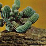 Композиция Кактус в камне 150x150 - Цветы