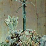 Композиция Цветущие камни 2 150x150 - Цветы