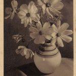Композиция из цветов № 0130 150x150 - Цветы