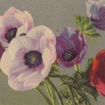 Композиция из цветов № 0133 150x150 - Цветы