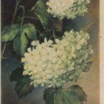 Композиция из цветов № 0134 150x150 - Цветы
