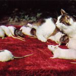 Кошка и белые мыши  150x150 - Другие животные