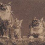 Кошки  150x150 - Другие животные