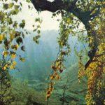 Краноярская тайга 150x150 - Пейзажи