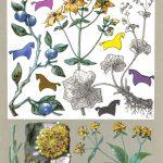 Красильные растения 150x150 - Удивительные растения