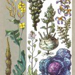 Крестоцветные 150x150 - Удивительные растения