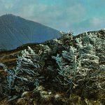 Крконоше. Гора Снежка 150x150 - Пейзажи