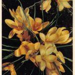 Крокусы 1 150x150 - Цветы