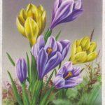 Крокусы 2 150x150 - Цветы