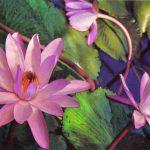 Кувшинки 150x150 - Цветы