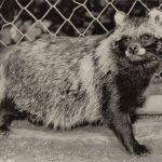 Куница 2  150x150 - Другие животные