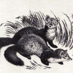 Куницы  150x150 - Другие животные