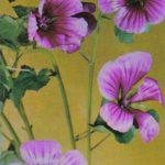 Лаватера 150x150 - Цветы