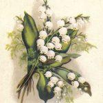 Ландыши 1 150x150 - Цветы