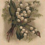 Ландыши 2 150x150 - Цветы
