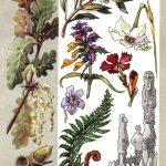 Легендарные растения 150x150 - Удивительные растения