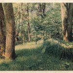 Лес 150x150 - Пейзажи