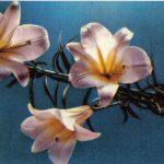 Лилии 8 150x150 - Цветы