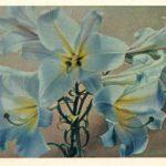 Лилии 9 150x150 - Цветы