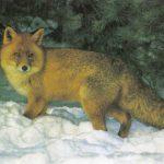 Лиса  150x150 - Другие животные