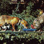 Лисица и петух  150x150 - Другие животные