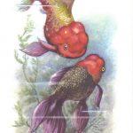 Львиноголовка 150x150 - Аквариумные рыбки