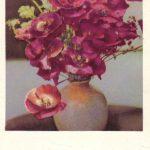 Маки 1 150x150 - Цветы