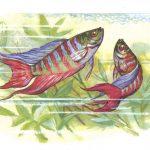 Макроподы 150x150 - Аквариумные рыбки