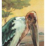 Марабу 150x150 - Птицы
