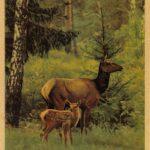 Маралы  150x150 - Другие животные