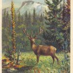 Марал 1  150x150 - Другие животные