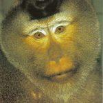 Мартышка Лапундер  150x150 - Другие животные