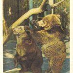 Медвежата 150x150 - Ленинградский Зоопарк