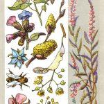 Медоносные растения 150x150 - Удивительные растения